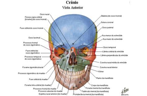 Atlas de anatomia humana download pdf — reducingexchange.ga